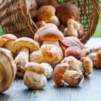 gljive, vrganji
