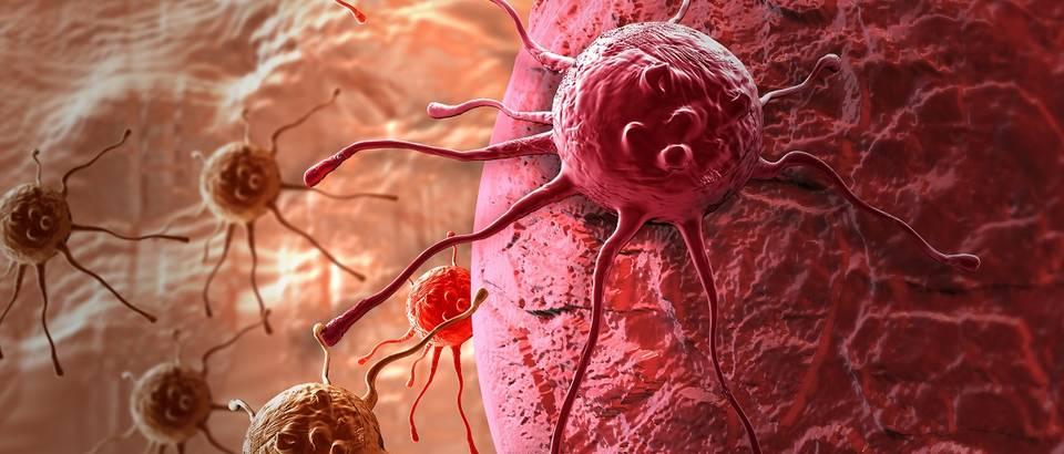 stanica raka, shutterstock