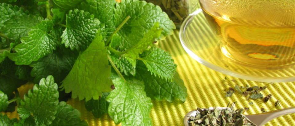 menta-metvica-pepermint-biljka-caj-biljni5