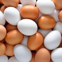 Bijela jaja