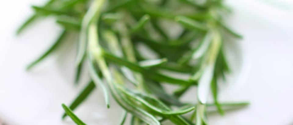 ruzmarin-bilje-zacin2
