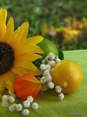 suncokret -limun