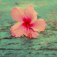 hibiskus, Shutterstock 603182762