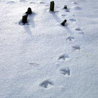 snijeg, tragovi u snijegu, pticica