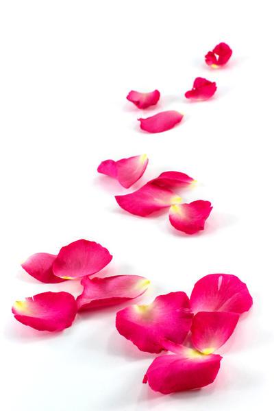 Ruža – mitski simbol ljubavi i ljepote