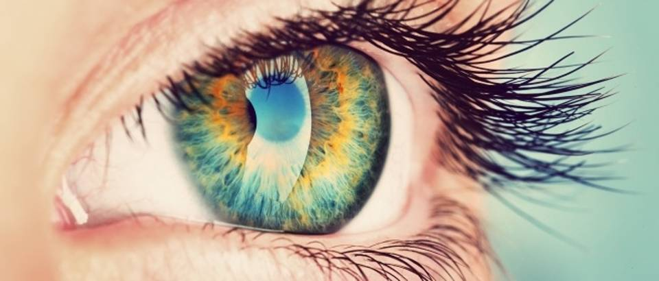 Shutterstock 280433198 zelene oči vid oko
