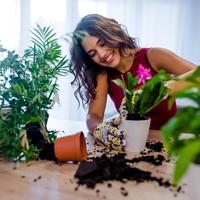 kucne biljke, Shutterstock 1179757147