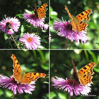 posljednja igra leptira