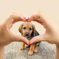 pas, Shutterstock 323161655