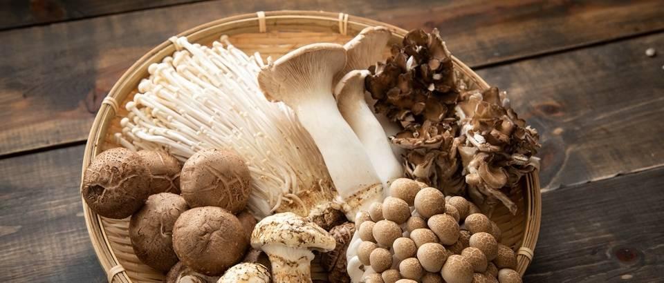 Gljive, branje gljiva, priručnik, vrste