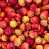 Jabuke crvene jabuke shutterstock 266473637