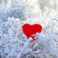 srece, zima, Shutterstock 357889010