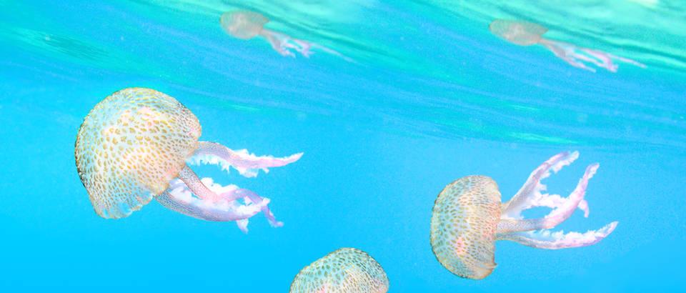 meduza, Shutterstock 144601940