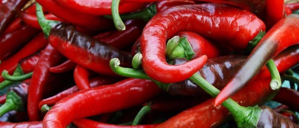 paprike chili ljute