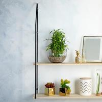 Bambus, dekoracija, dom