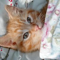 Macka, krevet, kucni ljubimac