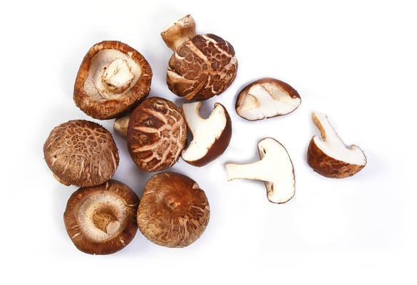 Shitake gljive