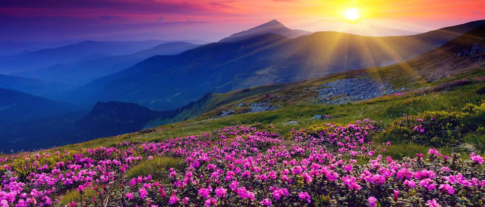 Priroda, sunce, planine, cvijeće, Shutterstock 97696616