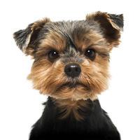 psi, pravila ponasanja