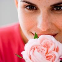 miris, ruza, cvijece