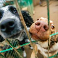psi u sklonistu, Shutterstock 527302681