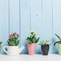 Kućne biljke teglice Shutterstock 301309400