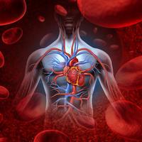 srce, srcani udar, infarkt, krvotok