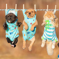 Psi, pas, kucni ljubimci, shutterstock