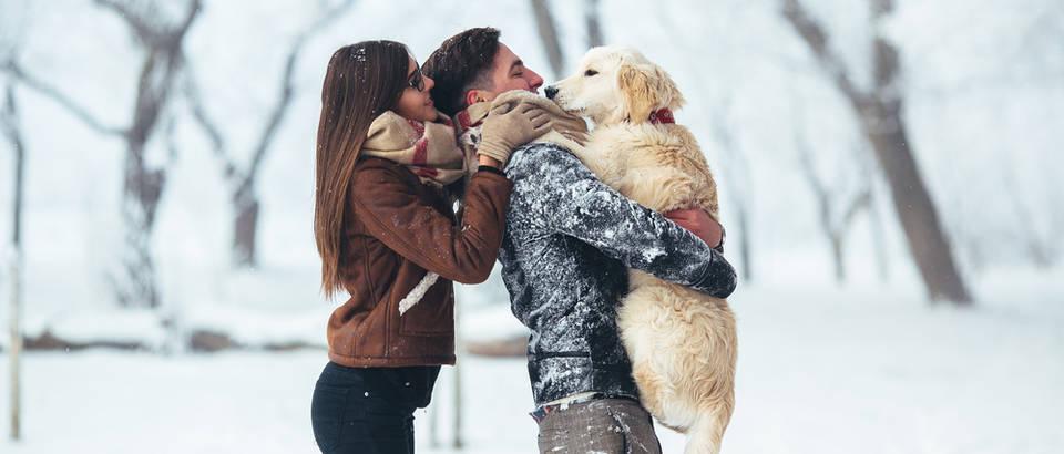 par, zima pas, Shutterstock 530669008