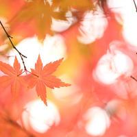 listovi, jesen, lisce