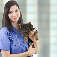 veterinarka, pas