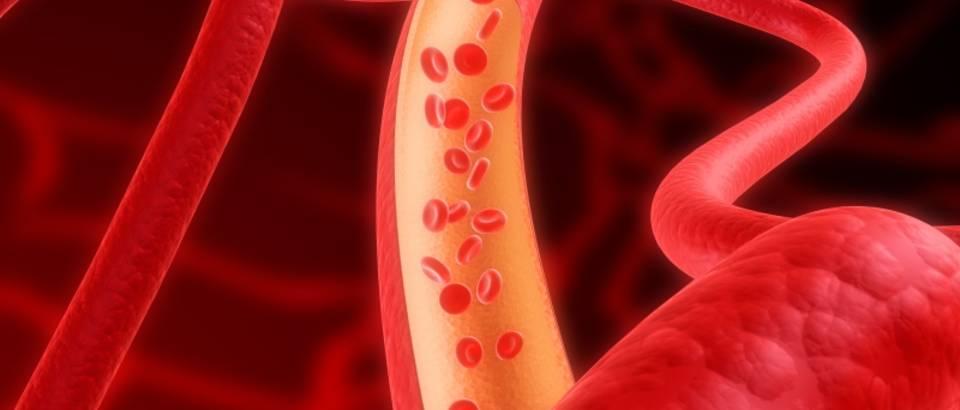 arterije-krvne-zile-krv