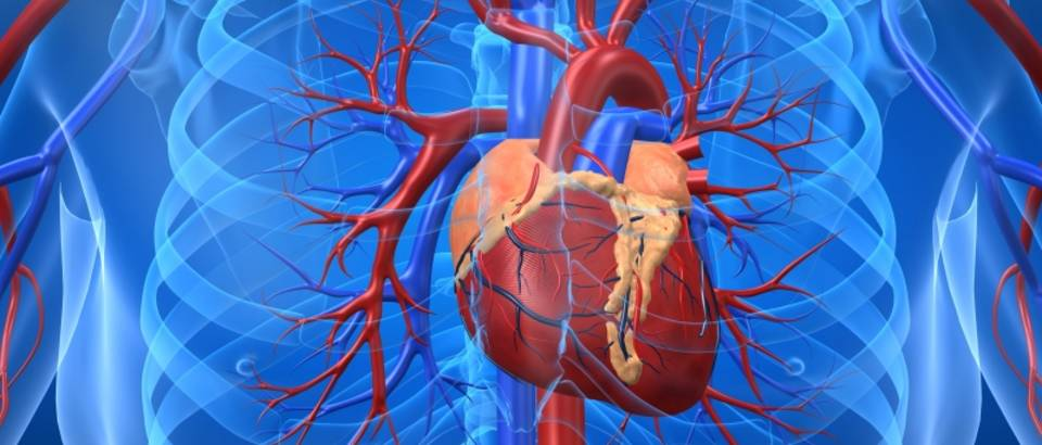 srce-srcani-udar-kardiovaskularni-sustav-3