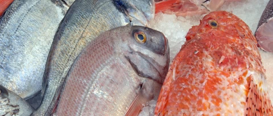 ribe-trznica-1