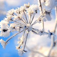 snijeg-zima-2