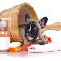 Kupanje, pas, kucni ljubimac, shutterstock