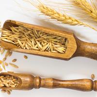 žitarica pšenica shutterstock 363208349