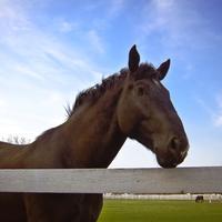 konj, farma, selo