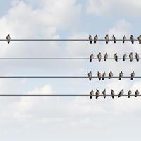ptice, individualizam, Shutterstock 296280893