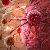 stanice raka