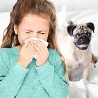 oneciscen zrak, alergije