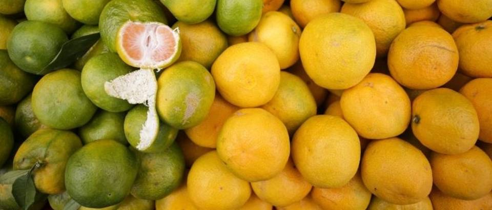 mandarine, PXL 300915 11763255