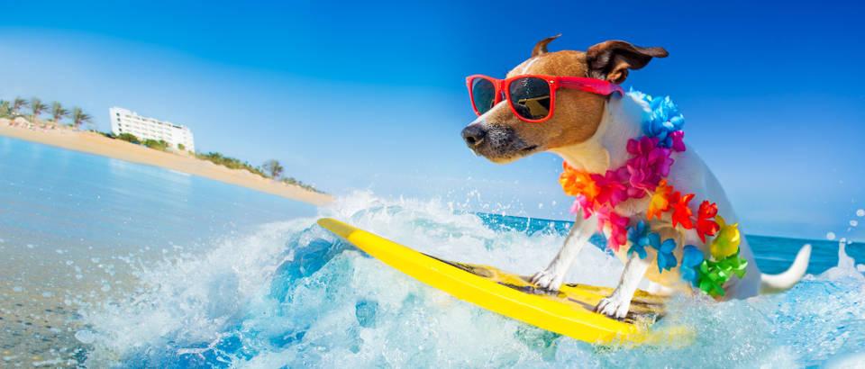 ljubimac, Shutterstock 1012453849