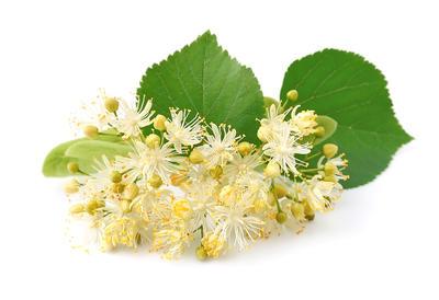 Od mirisnih cvjetova lipe pripremite ljekoviti čaj i opuštajuću kupku -  Ordinacija.hr