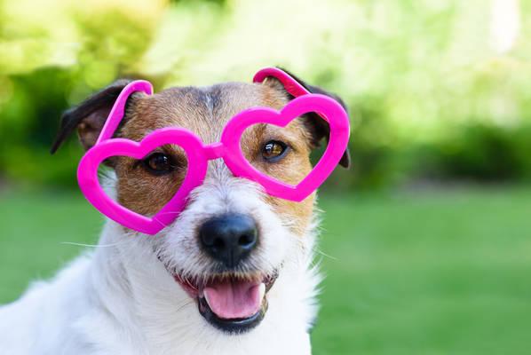 Pas srce ljubav ljubimci shutterstock 367747961   Copy