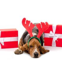 Blagdani božić sarovi depresija pas životinja shutterstock 348235811