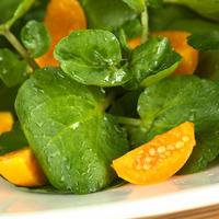 Potocarka salata shutterstock 93957493