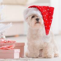 kucni ljubimci, bozic, bozicni poklon, shutterstock