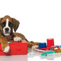 Shutterstock, pas, bokser, veterinar, kucni ljubimci