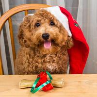 Psi, bozic, kucni ljubimci, shutterstock